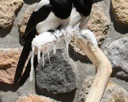 Meallet Geoffrey - Chidrac - Oiseaux
