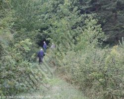 Meallet Geoffrey - Chidrac - Parc de debourrage sur lièvre, pour chiens courants
