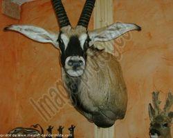 Meallet Geoffrey - Chidrac - Animaux d'ailleurs