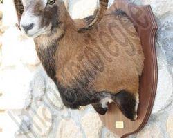 Meallet Geoffrey - Chidrac - Tetes en cape