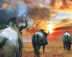 Meallet Geoffrey - Chidrac - Chasse Afrique de Sud