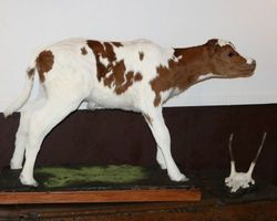 Meallet Geoffrey - Chidrac - Mammiferes